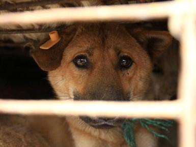 """""""国际动物保护基金会伴侣动物项目负责人郑智"""